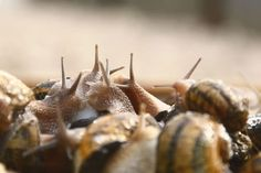 Escargots groep