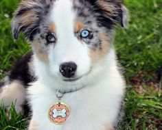15 of the Coolest Handmade Dog Tags You'll Find on the Whole Internet #PetDIY #DIY