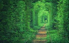 Abandoned Places Reclaimed by Nature Photos   Architectural Digest