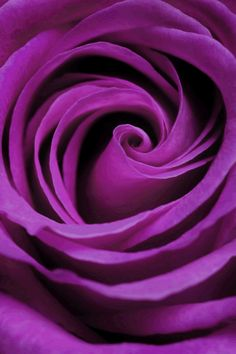Purple rose???? awwww~~