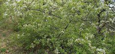 Év fája 2019 - Mosthallottam.hu Plants, Girdles, Plant, Planets