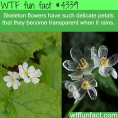 Skeleton flowers - WTF fun facts