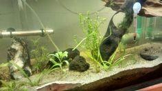 En proceso, acuario plantado....
