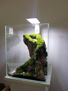 10 Tips on Designing a Freshwater Nature Aquarium Mini Terrarium, Planted Aquarium, Aquarium Fish, Aquascaping, Aquariums, Aquarium Landscape, Aquarium Accessories, Betta Fish Tank, Nano Tank
