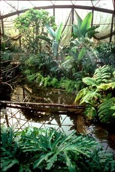 Ambius has worked with a number of zoos and aviaries throughout the world to create natural-looking habitats for their animals - http://www.plants-in-buildings.com/galleryunusualzoo.php#