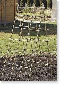 Building a Bamboo Trellis   Garden Gate Magazine