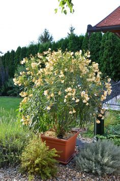 Why You Should Have a Garden Fountain Plantar, Bougainvillea, Container Gardening, Terrace, Fountain, Bonsai, Diy And Crafts, Nature, House