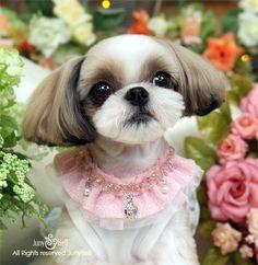 Aleyna beso correa Floral hecho a mano diseño Set / collares