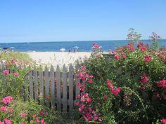 Princess Roses at Blue Water Riviera Resort Cape Cod, MA