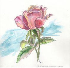 Watercolour - pen and ink #botanical #art