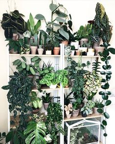 house flowers indoor 168885054763731526 - On a scale of 1 to rob a plant store, how desperate are you for a stunning like this? Jk, don't rob a plant store🌿 📷:… Source by nharnichard Inside Plants, Room With Plants, House Plants Decor, Plant Decor, Indoor Garden, Garden Plants, Indoor Plants, Ivy Plants, Hanging Plants
