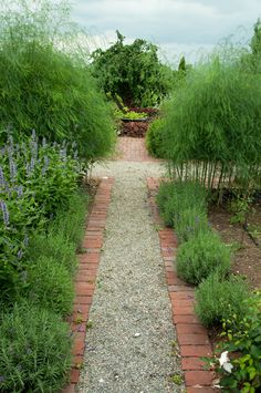 Bordered by lavender and ferny Asparagus. The Complete Kitchen Garden.