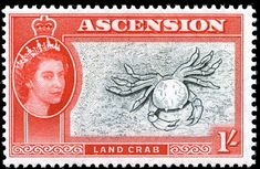 Land Crab, 1956, Ascension Island