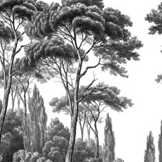 Pine and Cypress Sign 2 - Ananbô- Panneau Pins et Cyprès 2 – Ananbô Pine and Cypress Wallpaper 2 - Interior Wallpaper, Chinoiserie Wallpaper, Wallpaper Decor, Bathroom Wallpaper, Home Wallpaper, Wallpaper Ideas, Bedroom Posters, Black And White Wallpaper, Sketches