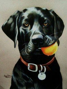 #DogSketch