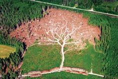 Logging operation carves a tree shape out of the forest.
