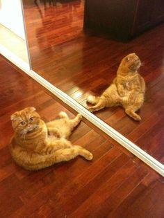 Do I look fat?