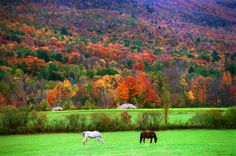 Gallery.ru / Фото #13 - Bucilla. New England fall scene - joyhope