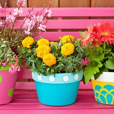 Sassy Plants Graphic stencils and paint in happy hues give plain terra-cotta pots sunny dispositions.