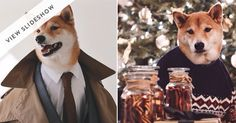 Animals in clothes: Forever delightful via @PureWow  VERY HANDSOME