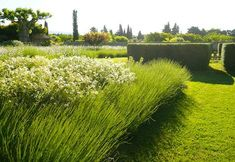 Textural mass plantings to capture light & wind.