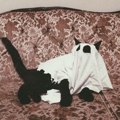 This black cat is ready for Halloween! Crazy Cat Lady, Crazy Cats, Funny Animals, Cute Animals, Funny Pets, Photo Chat, Spooky Scary, Scary Cat, Cute Cats