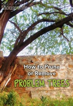 DIY Home Maintenance Tip: How to Prune or Remove Problem Trees | The Happy Housewife