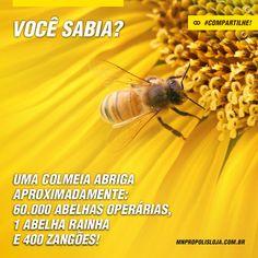 Cultura MN Própolis: Uma colmeia é na verdade uma mansão! #hajaespaço #superlotada