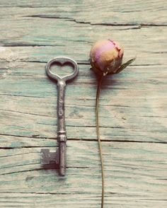 Skeleton key photograph vintage peony flower bud by dullbluelight, $45.00