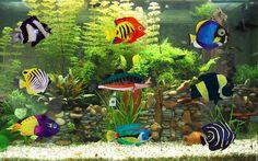 On peut tout imaginer avec des manches à air 😉 à retrouver sur https://lechoppe-du-vent.com/2070-manches-a-air-s/poissons-s #mancheàair #poissons #aquarium #exotique #vent #decorationsejardin #decorationexterieur #cestbeau