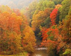 Mohican State Park. So gorgeous In the fall.