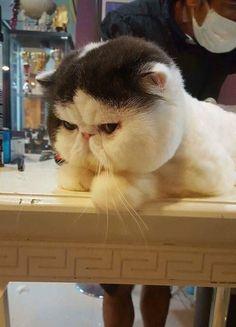 Why do such a mad face bro!!! http://ift.tt/2idMPKt