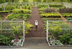 3 Celebritati in Gradina si Bucatarie Home And Garden, Plants, Women, Plant, Planets, Woman