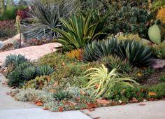 succulent garden. Long Beach, Calif., December.