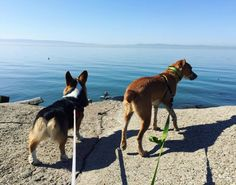 Never ending ocean at Hayward Regional Shoreline - Hayward, CA - Angus Off-Leash #dogs #puppies #cutedogs #dogparks #hayward #california #angusoffleash