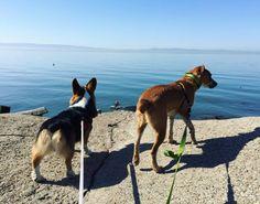 Never ending ocean at Hayward Regional Shoreline - Hayward, CA - Angus Off-Leash #dogs #puppies #cutedogs #dogparks #hayward #california #angusoffleash