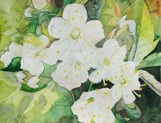 Frühling (c) Aquarell mit Kirschblüten von Frank Koebsch