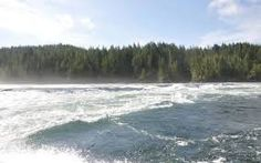 Experience Marine Wildlife While Kayaking and Whale Watching in BC Tidal Power, Whale Watching, Time Of The Year, Tour Guide, Wilderness, Kayaking, Wildlife, Tours, River