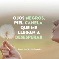 Este mensaje fue compartido vía Andrés Cepeda Decir No, Songs, Music, Quotes, Inspiration, Song Quotes, Verses, Cook, Fur
