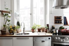 plant-filled kitchen.