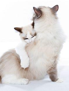 Kitten hug  (by DirtBikeDBA (Mike) on Flickr)
