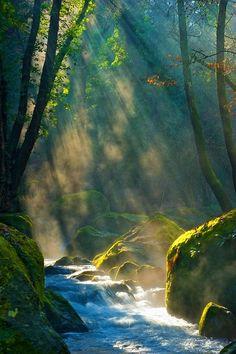 Lovely Light and Shadows~ river, sunlight, light streaming, Moss, mist, fog, Pacific Northwest.