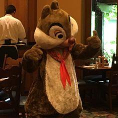Strike a pose Dale! . #Disney #Dale #Disneyland #disneyresort #love #chipmunk #disneyparks #disneyside #sundayfunday #weekend #l4l #followme #closeup #igers #igdaily #potd #likes #smile #favorite #love #model #pose by pinkydisney