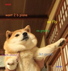 Flying Corgis - Continue To Baffle All Scientists - Imgflip |Flying Dog Meme