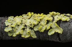 We've Been Wrong About Lichen For 150 Years Fungi, Garden Mushrooms, Spaceship Earth, Trees To Plant, Flora, Stuffed Mushrooms, Shelter, Science Room, Ap Biology