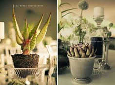 Next image >> Wedding Function, Candle Making, Plants, Photography, Image, Plant Pots, Creativity, Photograph, Making Candles