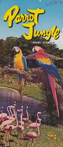 When I was little, and we made our yearly trips to Key Biscayne, Parrot Jungle was one of my favorite places to go. I loved seeing the flamingos. I also have pictures of my brothers and me from the 50's, with parrots on our arms!