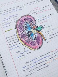 Estudante de medicina