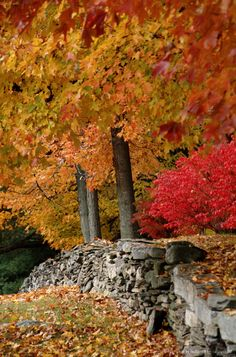 AUTUMN FOLIAGE ALONG