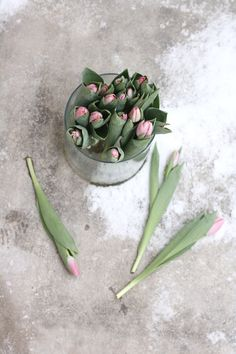 pretty photography of pink tulips | spring flowers . Frühlingsblumen . fleurs printemps | @ Mariaemb |